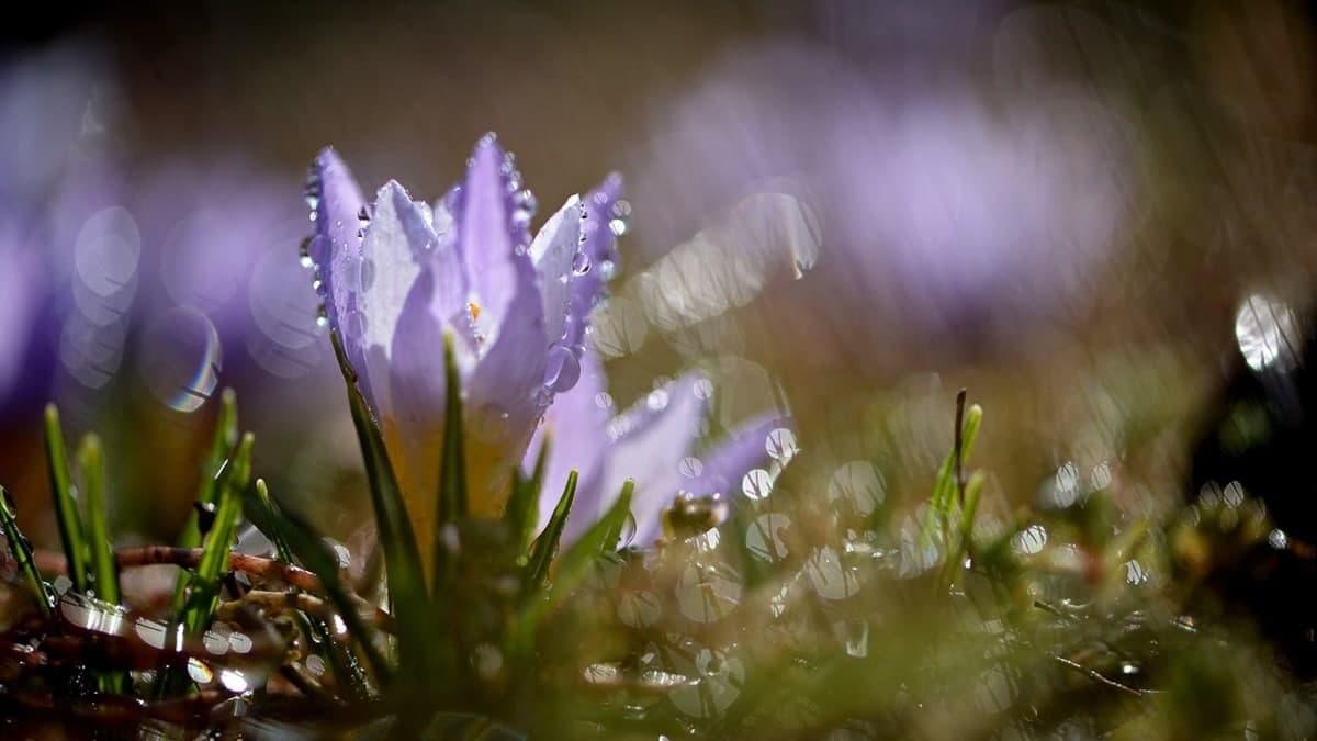 Завтра по Украине пройдут дожди, в некоторых регионах с грозами: погода на 23 апреля