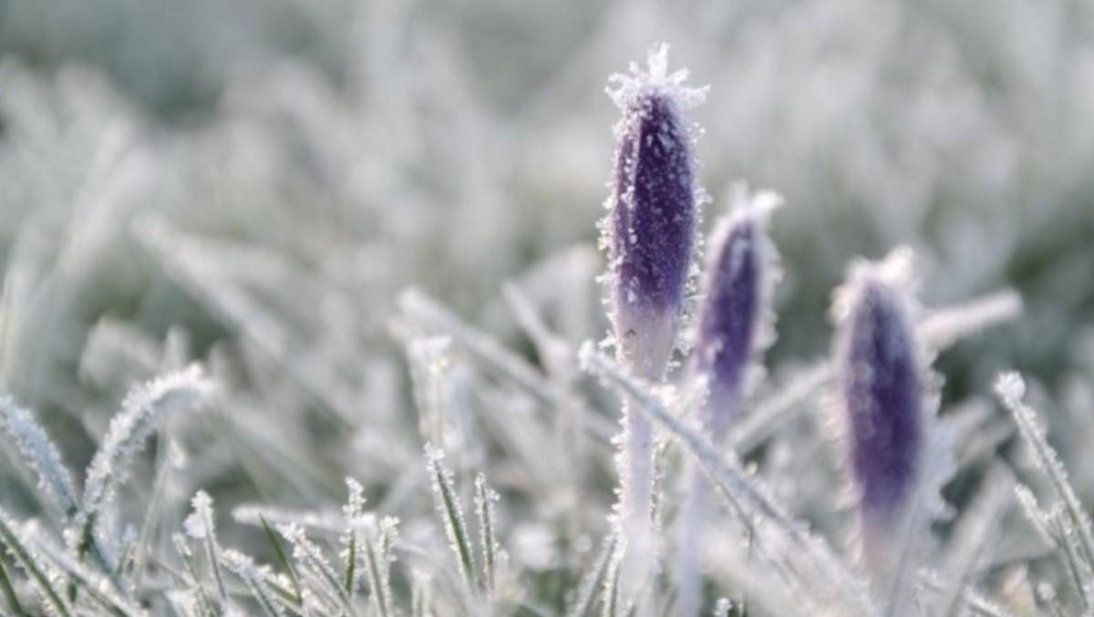 Синоптики прогнозируют заморозки в Украине