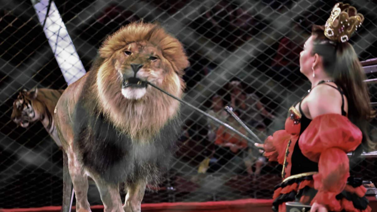 В Украине предлагают запретить эксплуатацию животных в цирках и контактных зоопарках