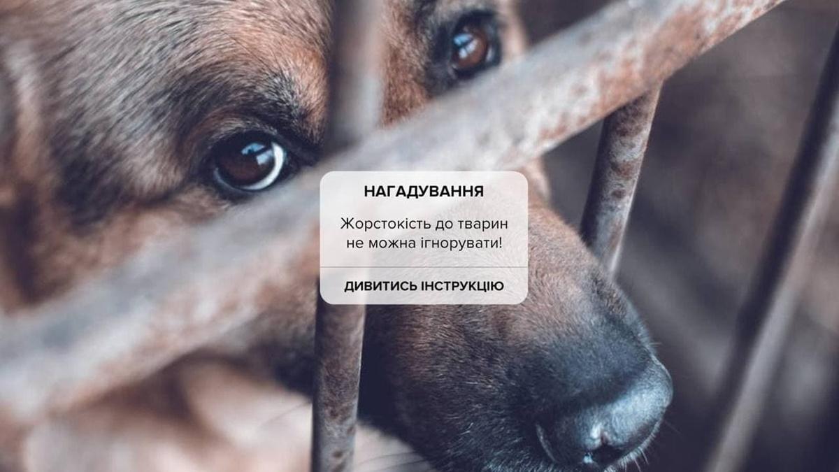 Як діяти, якщо ви стали свідком жорстокого поводження з тваринами