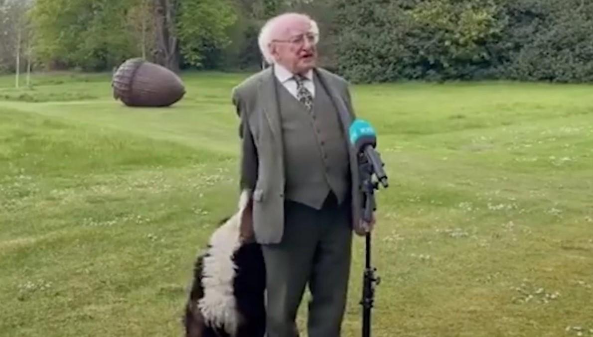 Президент Ирландии попал в курьезную ситуацию из-за семимесячного щенка