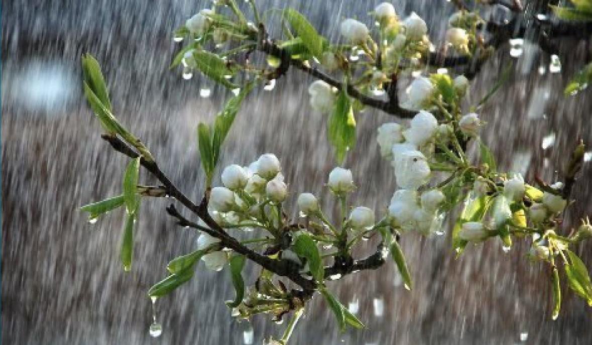 Дожди с грозами и до + 27: погода в Украине и Киеве на 27 мая