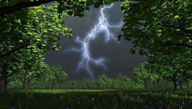 В Киеве объявили штормовое предупреждение из-за сильного ветра