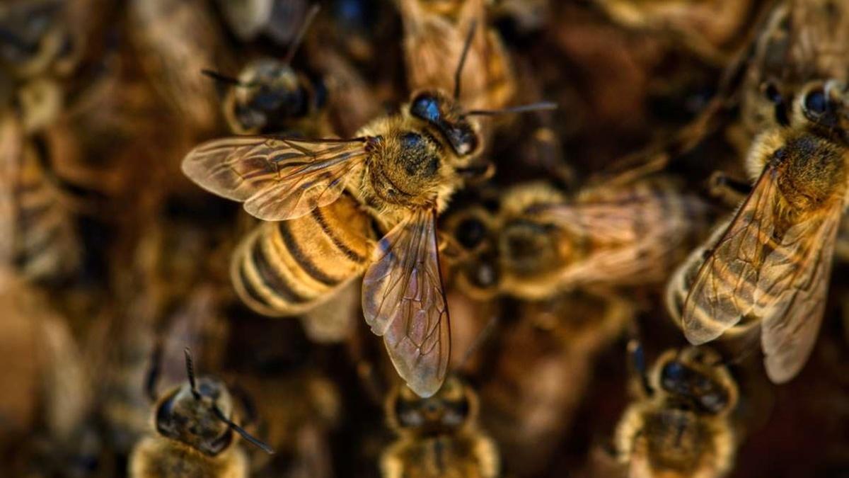 Покусали пчелы: в Ровенской области мужчина пришел с пасеки и умер