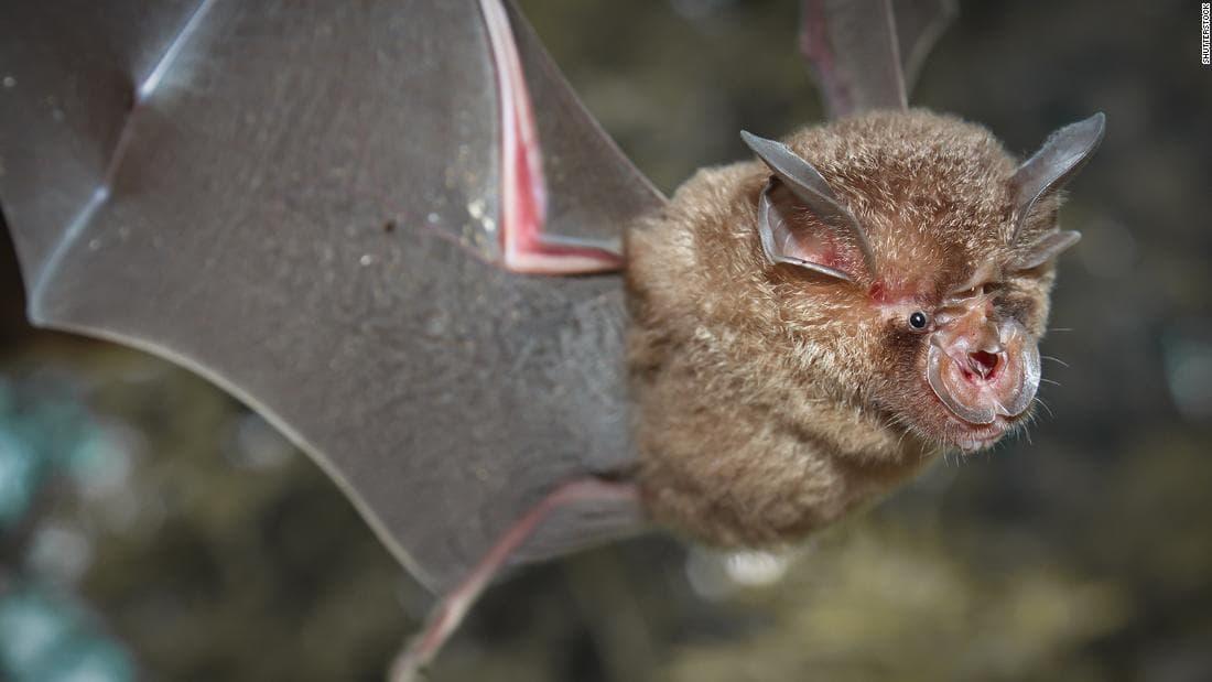 В Китае учёные нашли новые виды коронавируса у летучих мышей