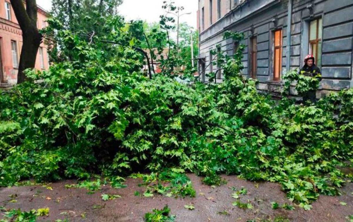 Буря и ливень во Львове: транспорт не ходит, повалены десятки деревьев, пострадал человек