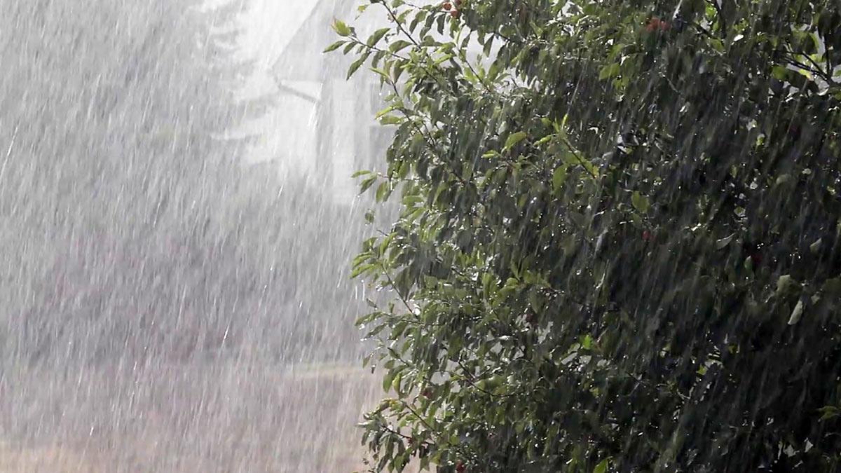 Во Львове из-за урагана погибли два человека