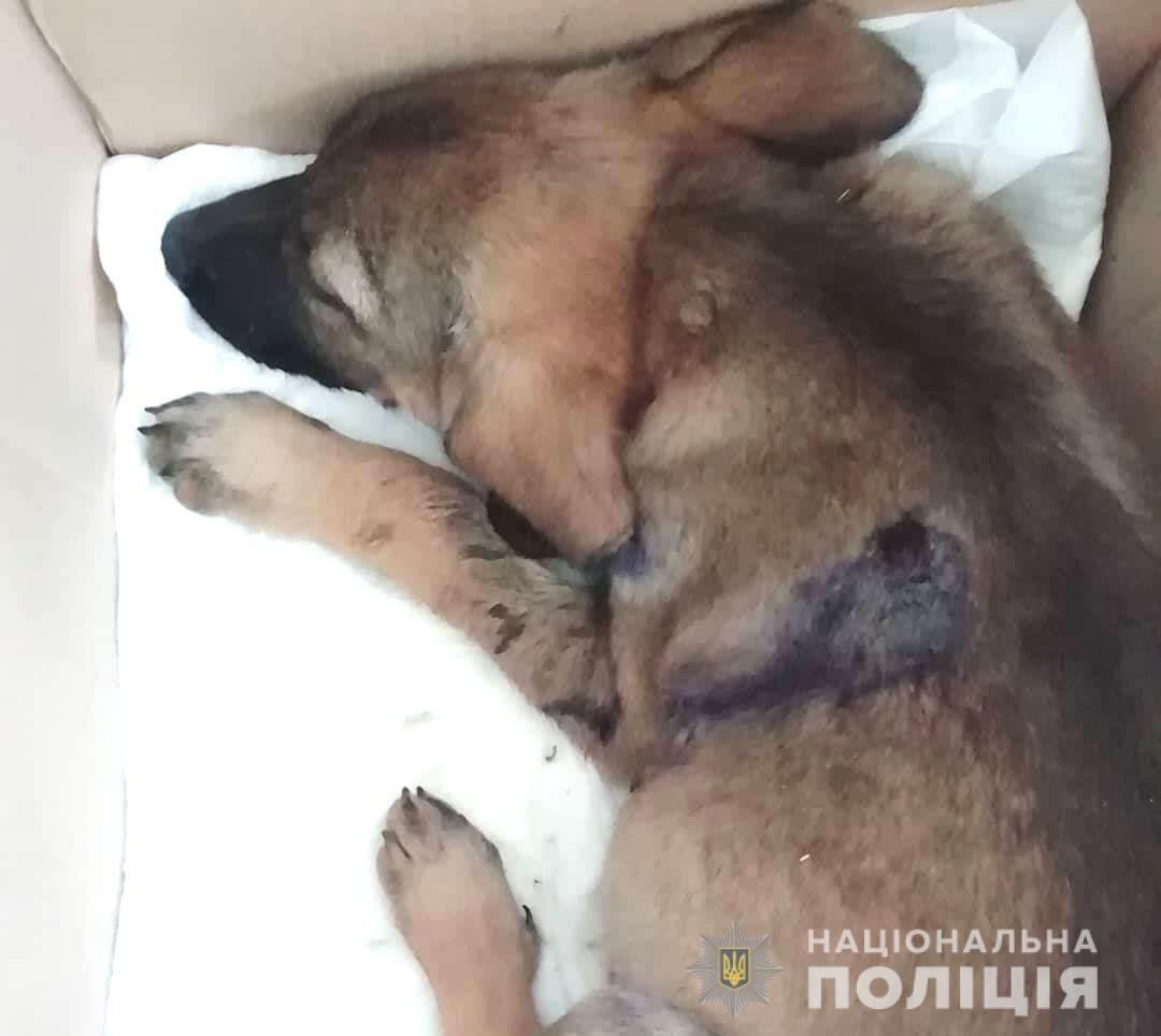 В Ровенской области мужчина расстрелял собак