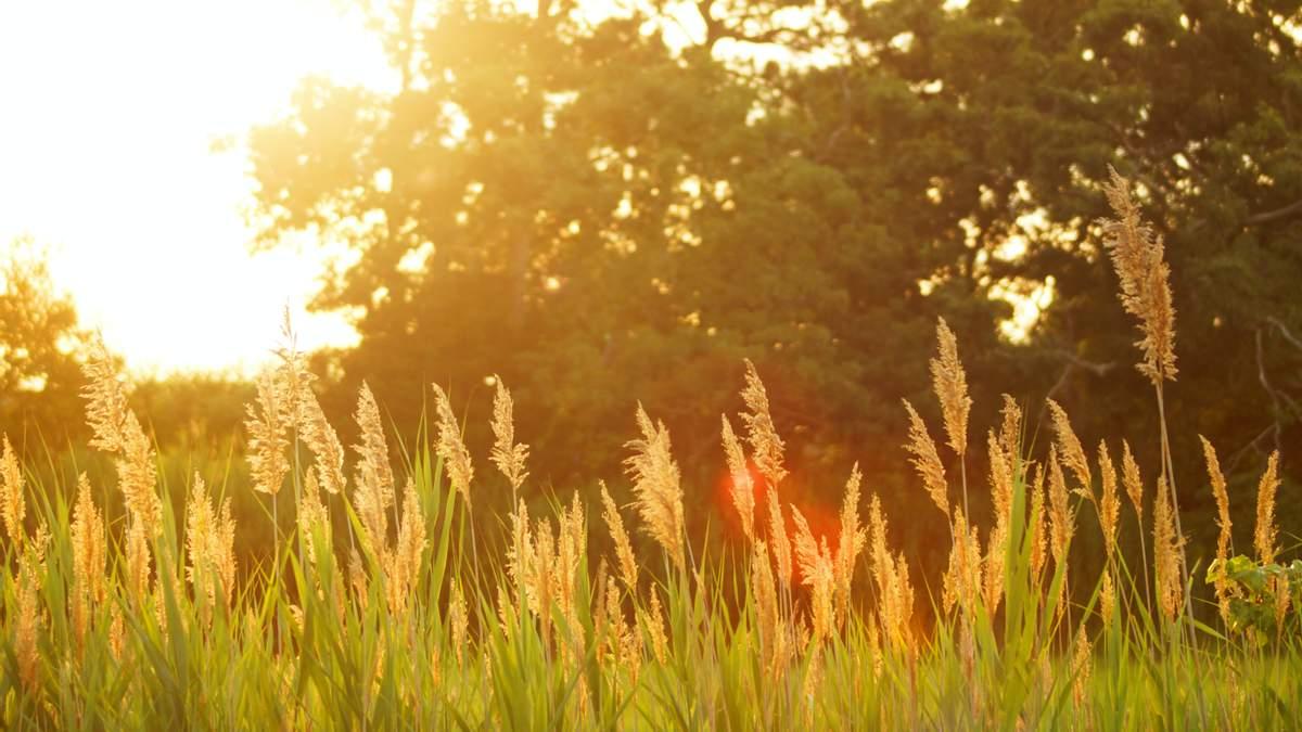 Солнце и мягкие температуры: погода в Украине на 11 сентября