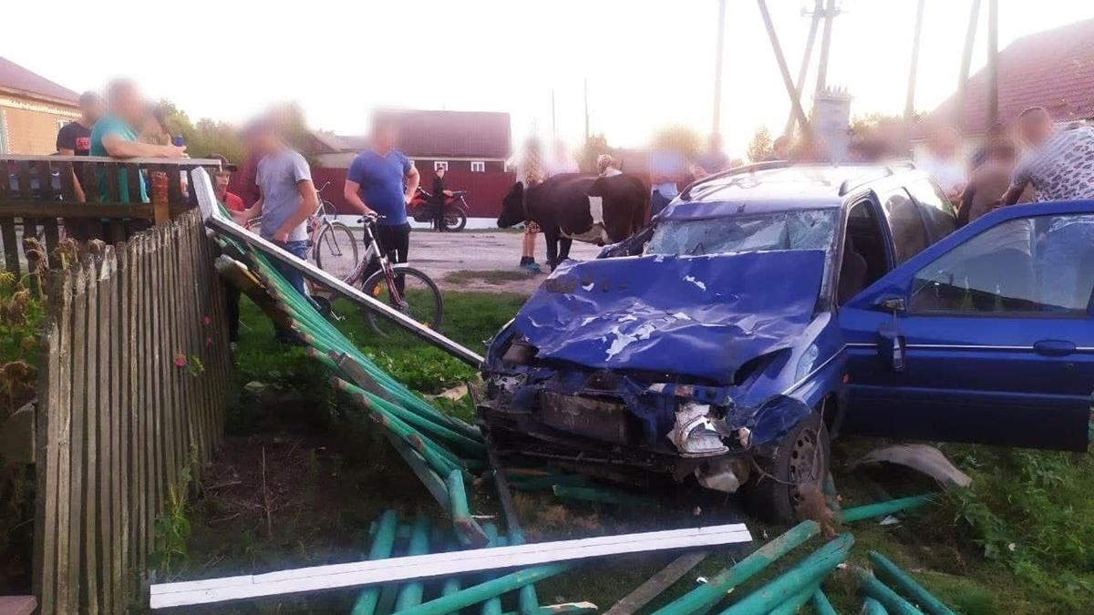 В Ровенской области пьяный водитель сбил насмерть двух коров, ещё четыре получили травмы