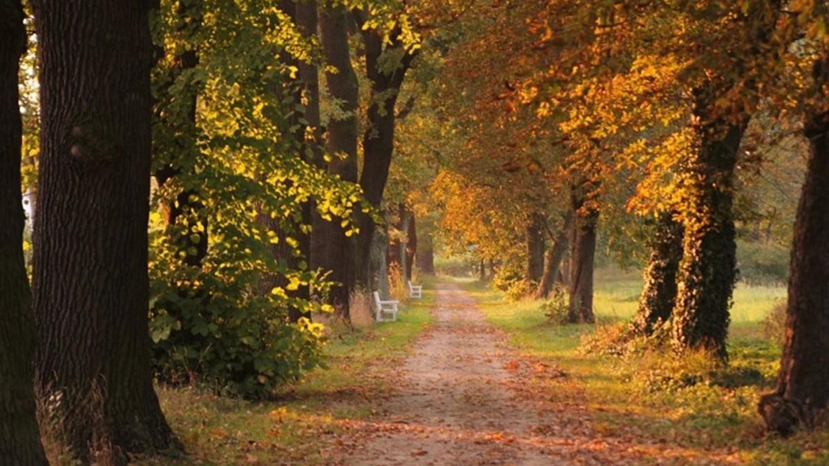 Дожди на западе и до + 29 тепла: погода в Украине на 14 сентября