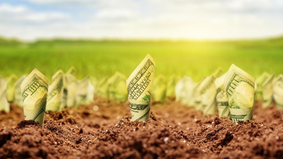 «Стоимость будет расти»: украинцев призывают не спешить с продажей земли