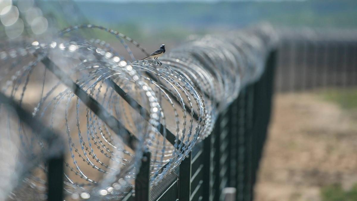 Литва до конца года построит 100 км забора на границе с Беларусью