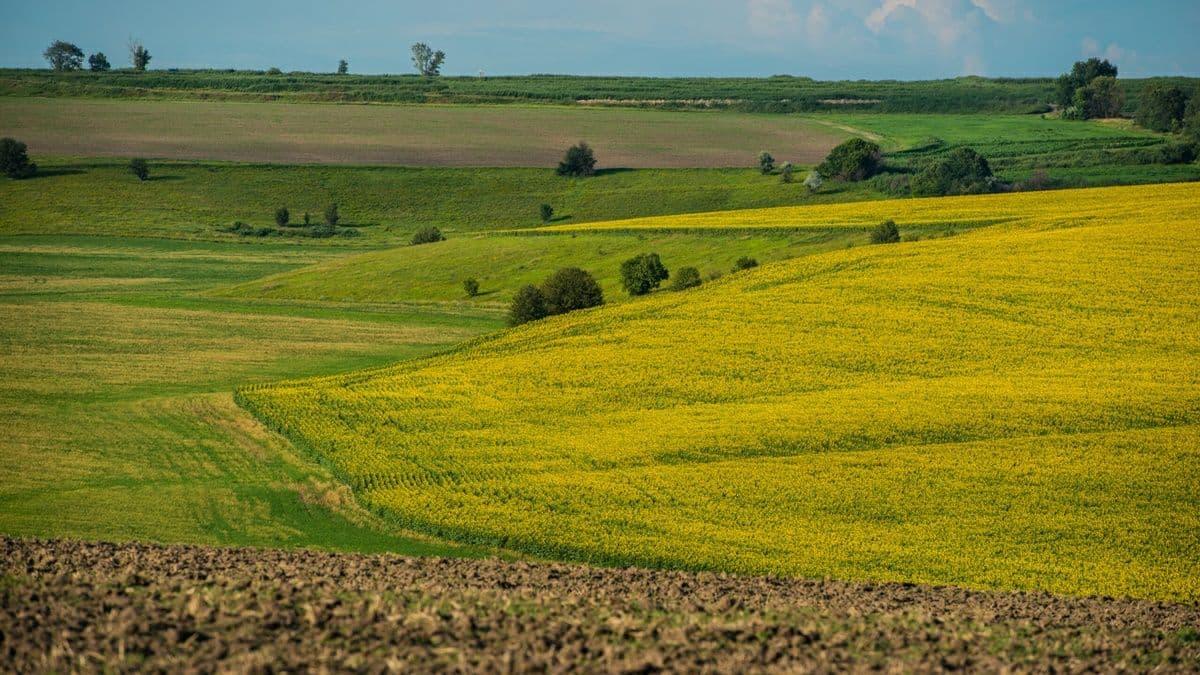 Украинцы продали больше 42 тысяч гектаров земли с 1 июля