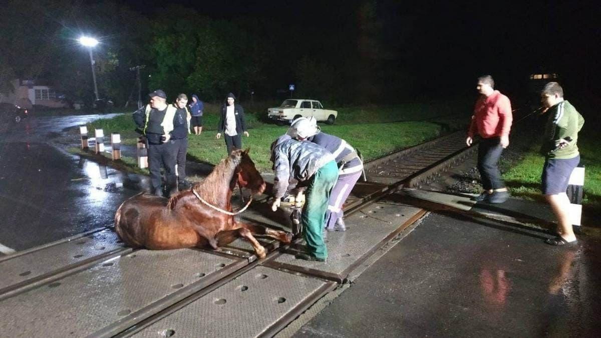 В Волынской области спасатели освободили коня, застрявшего в рельсах на переезде