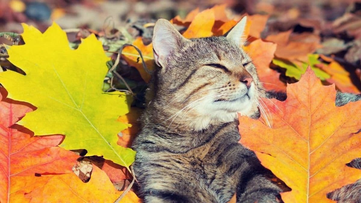 Завтра в Україні буде м'яко і сонячно: погода на 26 вересня