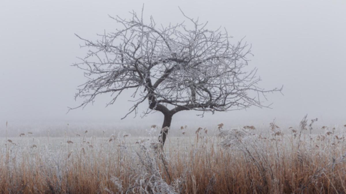 В Украину идёт новый циклон: какой будет погода 13 октября