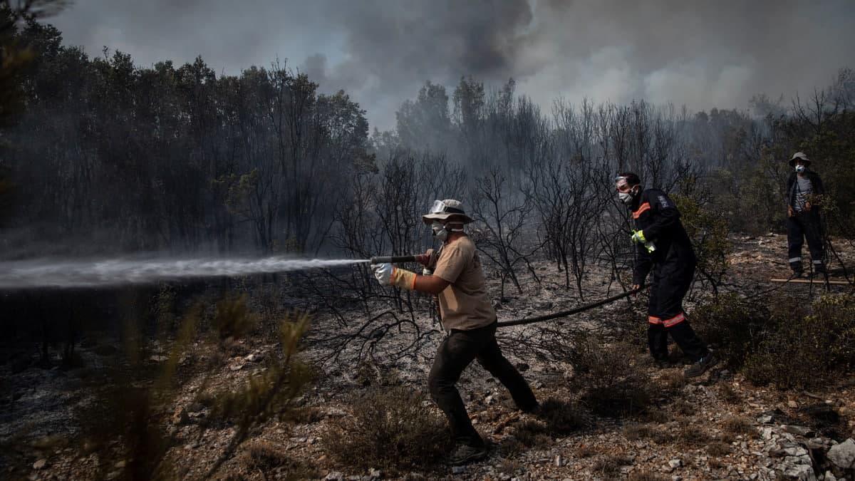 На юге Турции бушуют лесные пожары: огонь быстро распространяется из-за ветра