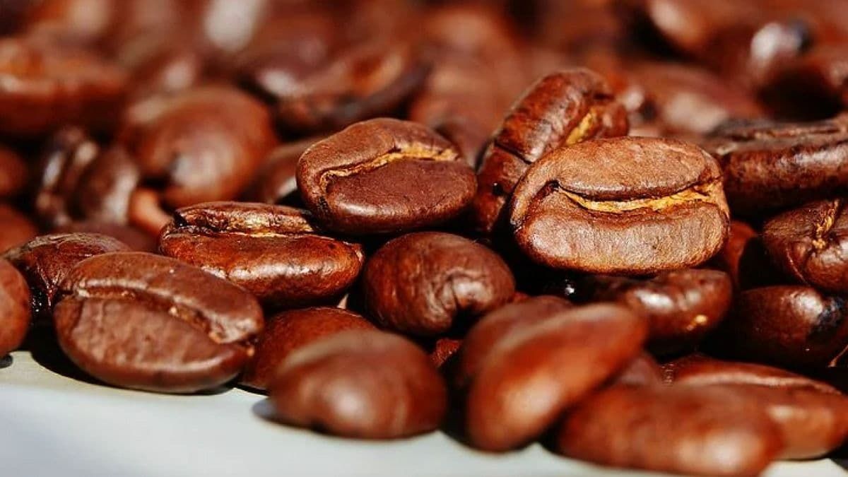 В Финляндии учёные презентовали кофе из пробирки