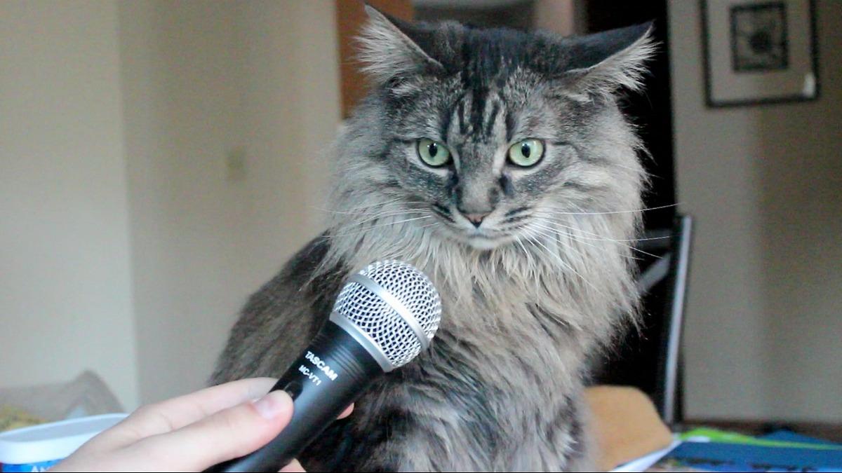 Бывший инженер Amazon создал приложение для перевода кошачьего мяуканья