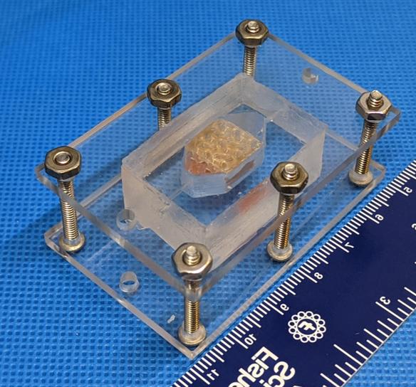 Две команды ученых по заказу NASA смогли создать жизнеспособные ткани человеческой печени